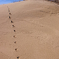Sand Tracks by Randy Pollard