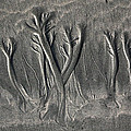 Sand Trees by Alicia Kent