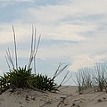 Delaware Sand Dune by Christiane Schulze Art And Photography