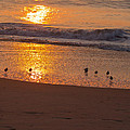 Sanderlings At Sunrise by Scott Bush