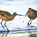 Sanderlings Playing At The Beach by John Wadleigh