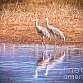Sandhill Crane 11 by Larry White