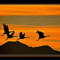 Sandhill Crane At Sunset by Larry White