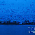 Sandhill Crane Blue Hour by Joan Wallner