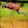 Sandhill Crane I by Kathy Sampson
