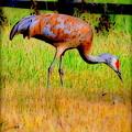 Sandhill Crane II by Kathy Sampson