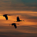 Sandhill Crane Sunset by Martin Belan