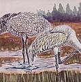 Sandhill Cranes Feeding by Richard Goohs
