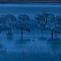Sandhill Cranes In The Dark Bosque Del Apache Wildlife Refuge  by Gary Langley