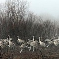 Sandhill Cranes In The Fog by Farol Tomson