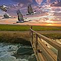 Sandhill Cranes Over Rice Fields by Ron Schwager