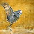 Sandhill Dancing by Bruce Bain