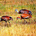 Sandhill Family by Kathy Sampson