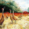 Sandhill Serenade by Marilyn Smith