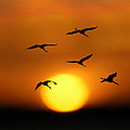 Sandhill Sunset by Curtis Dale