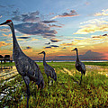 Sandhill Sunset by Debra and Dave Vanderlaan