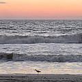 Sandpiper At Sunrise by Ellen Meakin