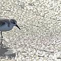 Sandpiper Reflections II by Carol McGunagle