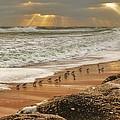 Sandpiper Sunrise by Danny Mongosa
