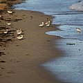 Sandpipers 2 by Allan Morrison