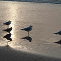 Sandpipers And Seagulls by Brenda Salamone