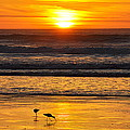 Sandpipers At Sunset by AJ  Schibig