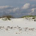 Sandpipers On Dune by Dajana Haggard