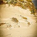 Sands Of Elafonisi by Oleg Koryagin