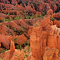 Sandstone Hoodoos At Sunrise Bryce Canyon National Park Utah by Dave Welling