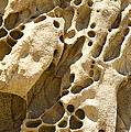 Sandstone Rock Formation Two At Big Sur  by Artist and Photographer Laura Wrede