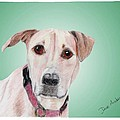 Sandy - A Former Shelter Sweetie by Dave Anderson