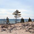 Sandy Dune by Linda Kerkau