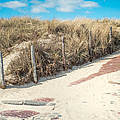 Sandy Dunes In Holland by Jenny Rainbow