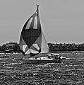 Sandy Hook Sailing II by Lilliana Mendez