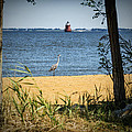 Sandy Pt Shoal Lighthouse And Blue Heron by Brian Wallace