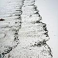 Sandy Shore by Casey Herbert
