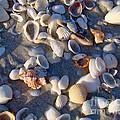 Sanibel Island Shells 1 by Nancy L Marshall