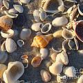 Sanibel Island Shells 2 by Nancy L Marshall