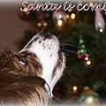 Santa - Christmas - Pet by Travis Truelove