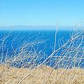 Santa Cruz Island Sea Of Grass by Kyle Hanson