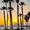 Santa Monica Palms by Az Jackson