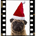 Santa Pug - Canine Christmas by Edward Fielding