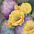 Santa Rita In Bloom by Summer Celeste