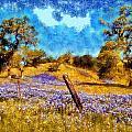 Santa Rosa Field by Kaylee Mason