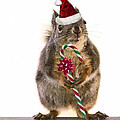 Santa Squirrel And Candy Cane by Peggy Collins