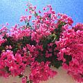 Santorini Flowers Grk1113 by Dean Wittle