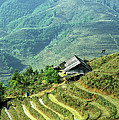Sapa Rice Fields by Rick Piper Photography