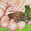 Sarah's Snail by Marie Stone Van Vuuren