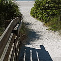 Sarasota Beach Walk Path. by Robert Birkenes