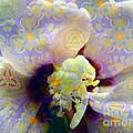 Satin Flower Fractal Kaleidoscope by Renee Trenholm
